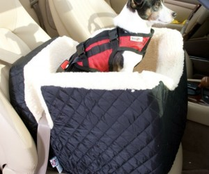 Pet car seat – The perfect car seat for your pet dog, cat, or iguana.