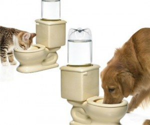 Toilet Water Bowl For Pets – It's unsanitary for your pet to drink out of your toilet, but for some reason they just