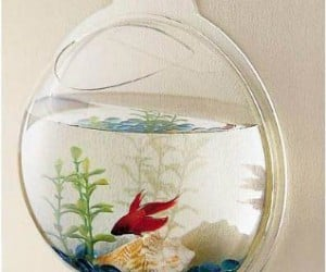 If you have your fish bowl screwed to your wall, it would be a lot harder to spill. Besides, it looks really neat.