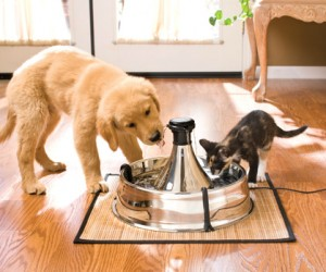 Keep your pet's water fresh at all times with the continuous flow pet fountain, no more stagnate water for your fur babies.