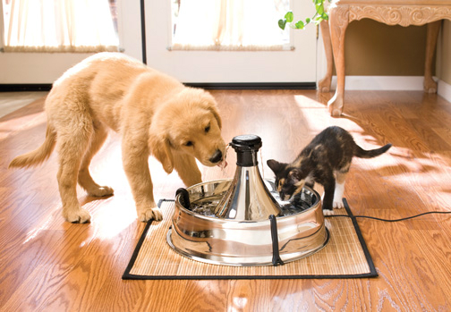 Pet Fountain Shut Up And Take My Money