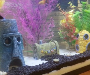 Who lives in a pineapple under the sea? Your pet fish does!