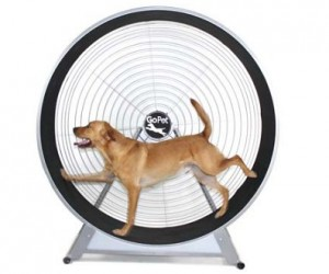 Dog Exercise Wheel – Why should hamster have all the fun?