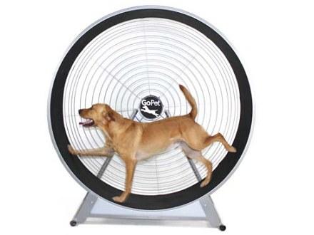 dog exercise wheel