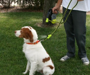 With his own personal water mister, your dog won't mind taking those long hot summer walks!