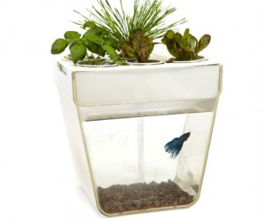 Own your very own self contained ecosystem. The fish poop feeds the plants the plants clean the water, just remember to feed the fish every now and then.