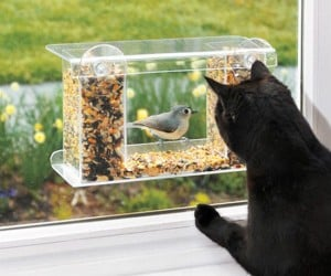 You and your kitties can stalk the birds without them even knowing it!