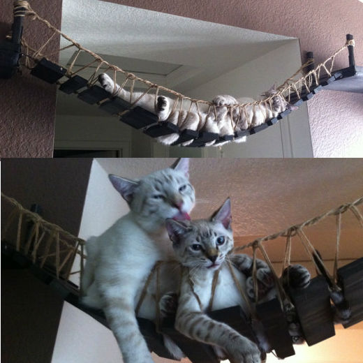 Indiana Jones Cat Bridge Shut Up And Take My Money