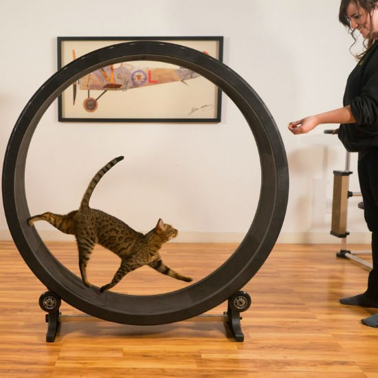 Cat Exercise Wheel Shut Up And Take My Money