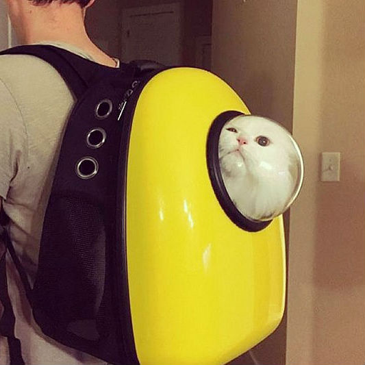cat-bubble-backpack