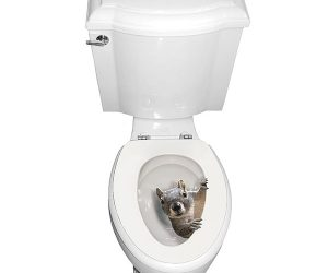 Squirrel Toilet Seat Decal Sticker!